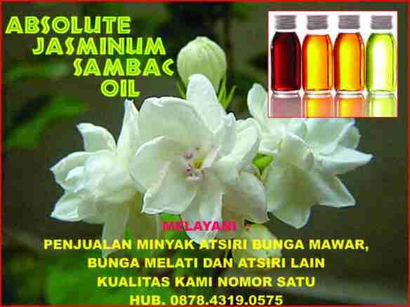 minyak atsiri bunga melati