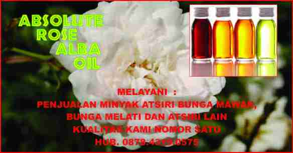 rose alba oil